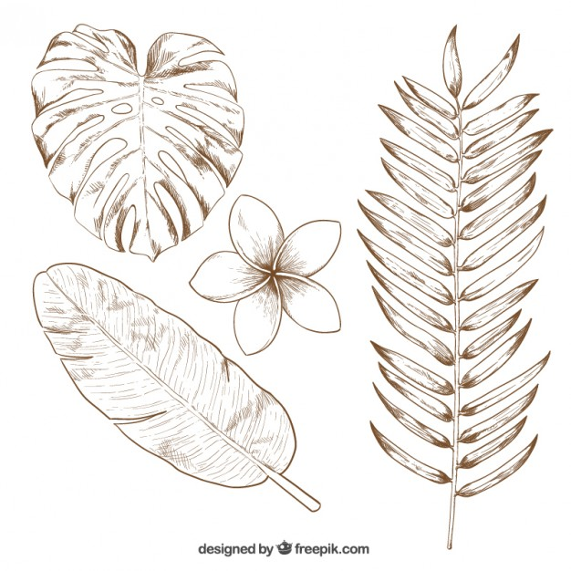 626x626 Hand Drawn Tropical Leaves Vector Free Download