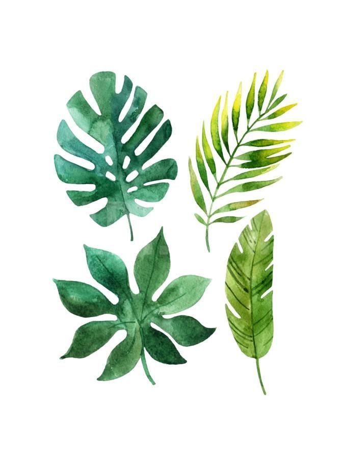 671x894 Tropical Leaves Art Print By Tanycya