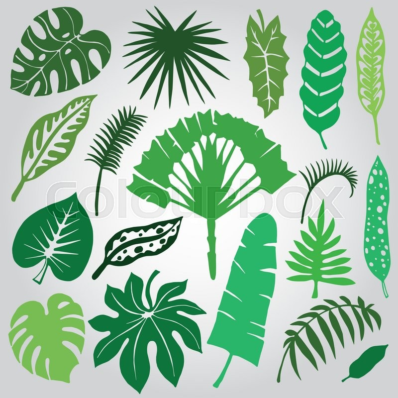 800x800 Tropical Palm Leaves Set.vector Leaf,silhouette Drawing In Vintage