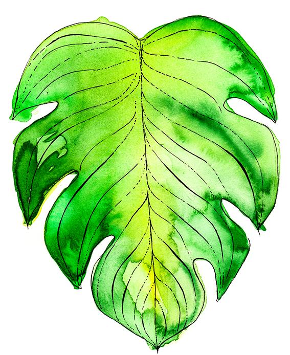 567x694 Tropical Leaves Ella's Place