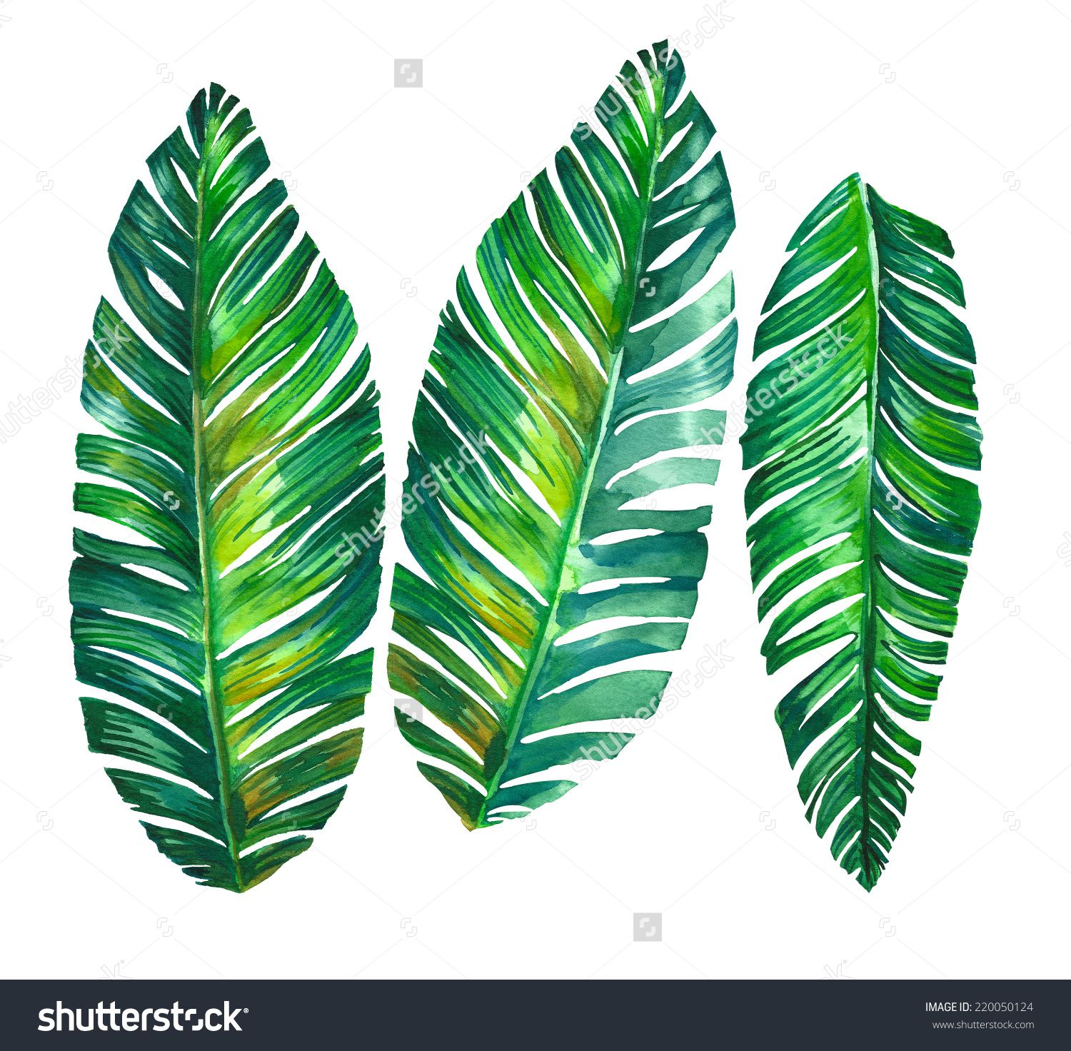 1500x1472 Leaves Stock Photos, Images, Amp Pictures Shutterstock Home