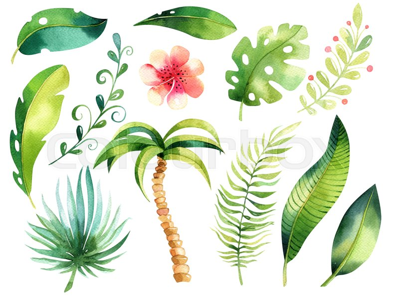 800x604 Tropical Isolated Illustration Collection. Watercolor Boho Tropic