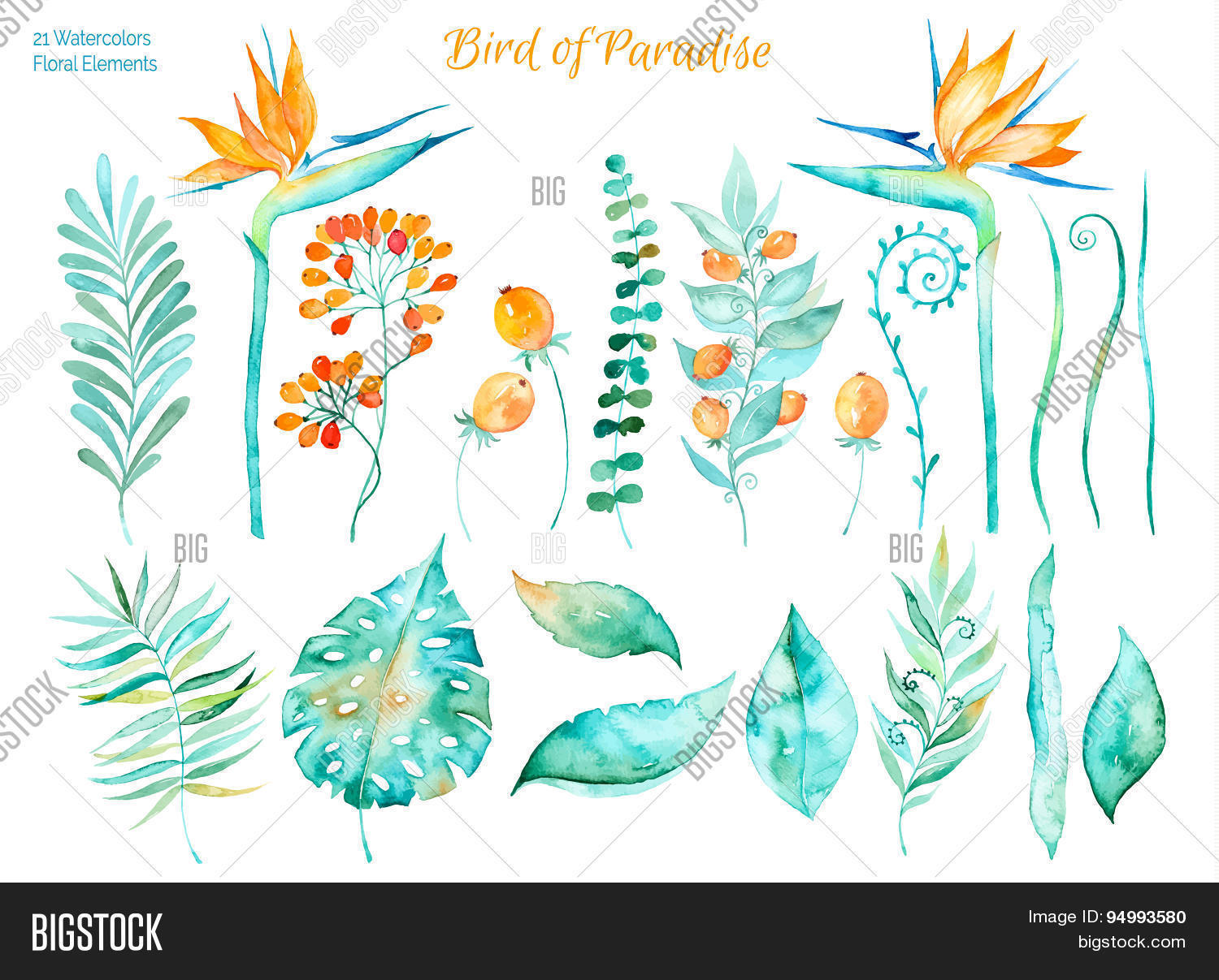 1500x1207 Vector Floral Set.colorful Floral Vector Amp Photo Bigstock