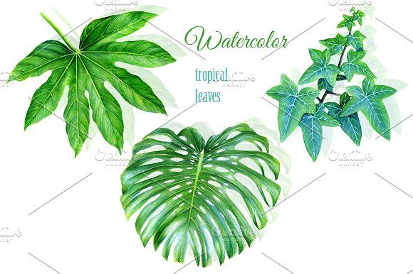 580x386 Watercolor Tropical Leaves Drawing By Ramarama On @creativemarket