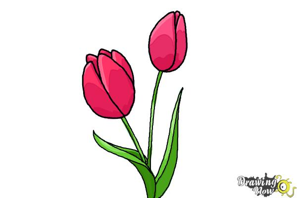 600x400 How To Draw A Tulip