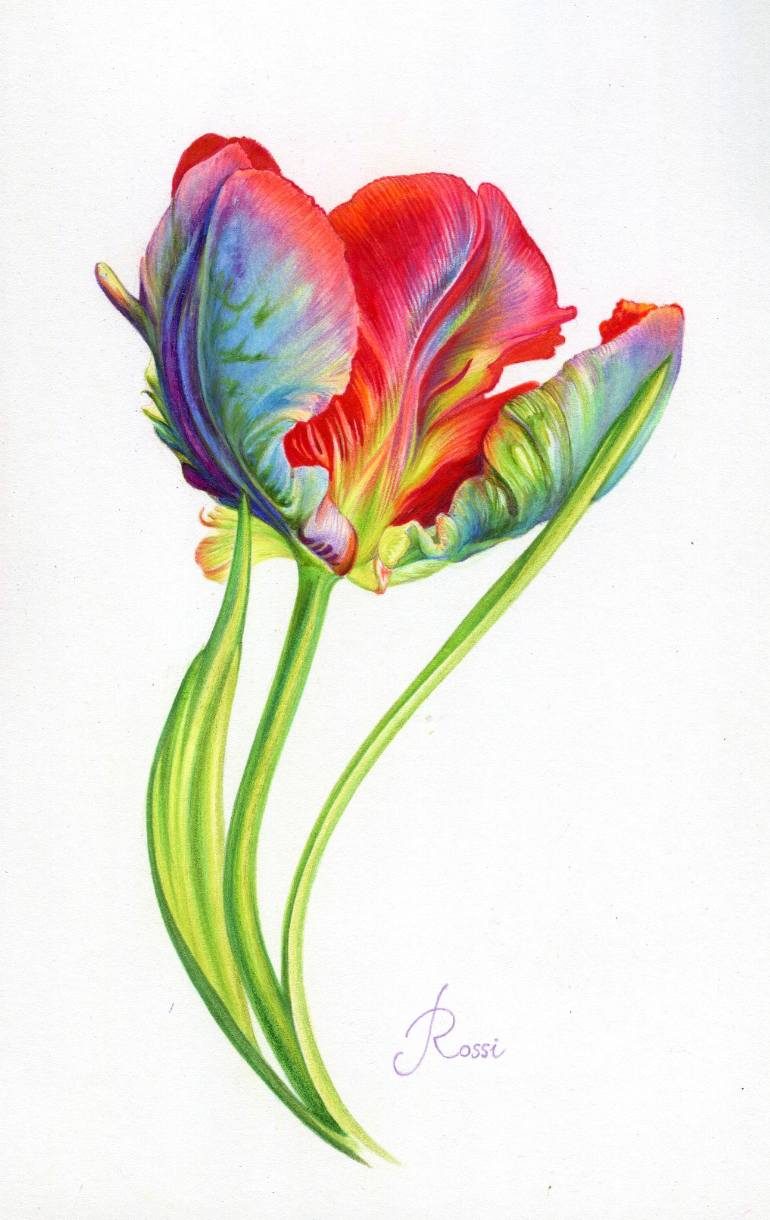 770x1220 Saatchi Art Parrot Tulip Drawing By Rossi Hadzhieva
