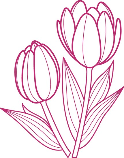 430x548 Tulip Outline Drawing