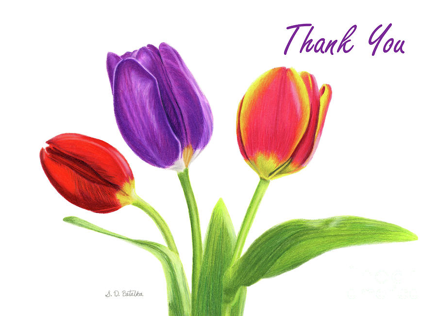 900x651 Tulip Trio Thank You Cards Drawing By Sarah Batalka