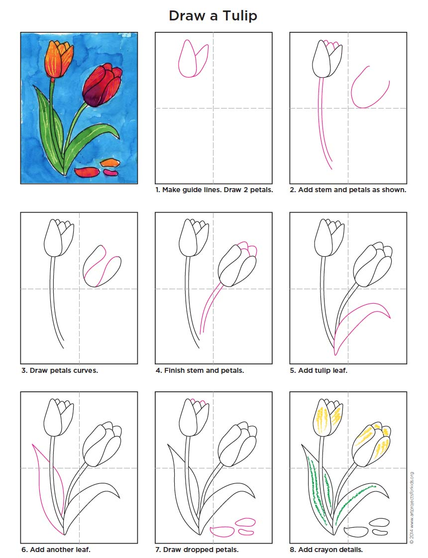 860x1121 Draw And Paint A Tulip