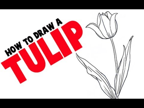 480x360 How To Draw A Tulip Step By Step Flower Tutorial.