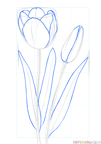 403x575 How To Draw A Tulip Step By Step Drawing Tutorials