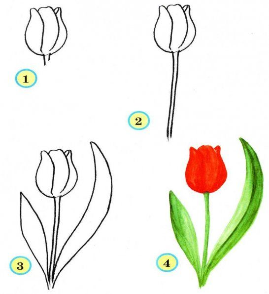 546x595 Learn To Draw For Kids Flowers Step By Step, Pictured Tutorials