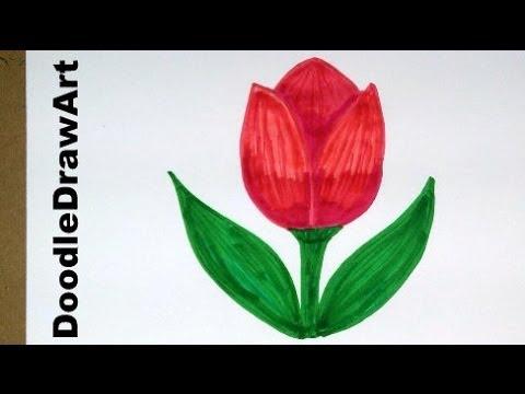 480x360 Drawing How To Draw Cartoon Tulip Flower