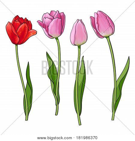 450x470 Hand Drawn Set Side View Red, Pink Vector Amp Photo Bigstock