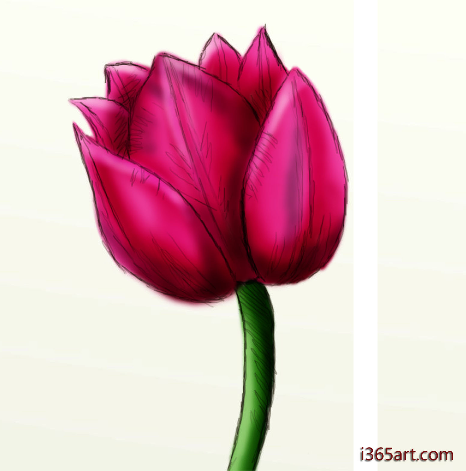 1554x1569 How To Draw A Beautiful Tulip Draw, Paintings And Flower Doodles