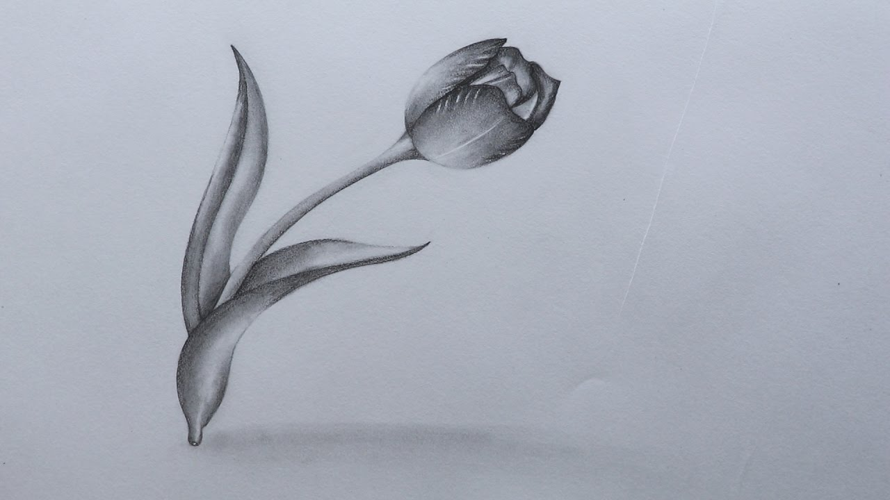 1280x720 How To Sketch A Tulip Flower