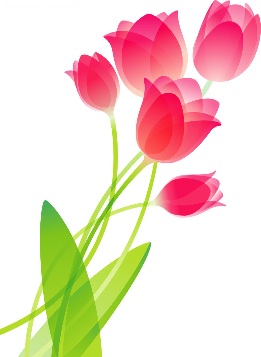 879x1200 Tulip Flower Drawing Flower Drawing