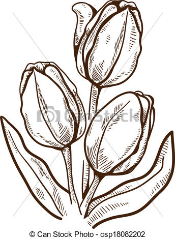 344x470 Tulip Flower Isolated On White. Hand Drawn Sketch. Eps 10