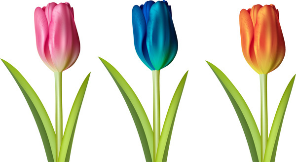 600x328 Vector Tulip Flower Drawing Free Vector Download (97,870 Free