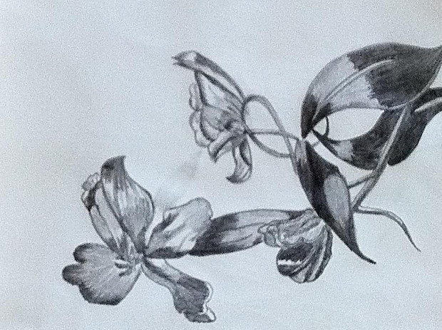 620x463 20 flower drawings sketches design trends