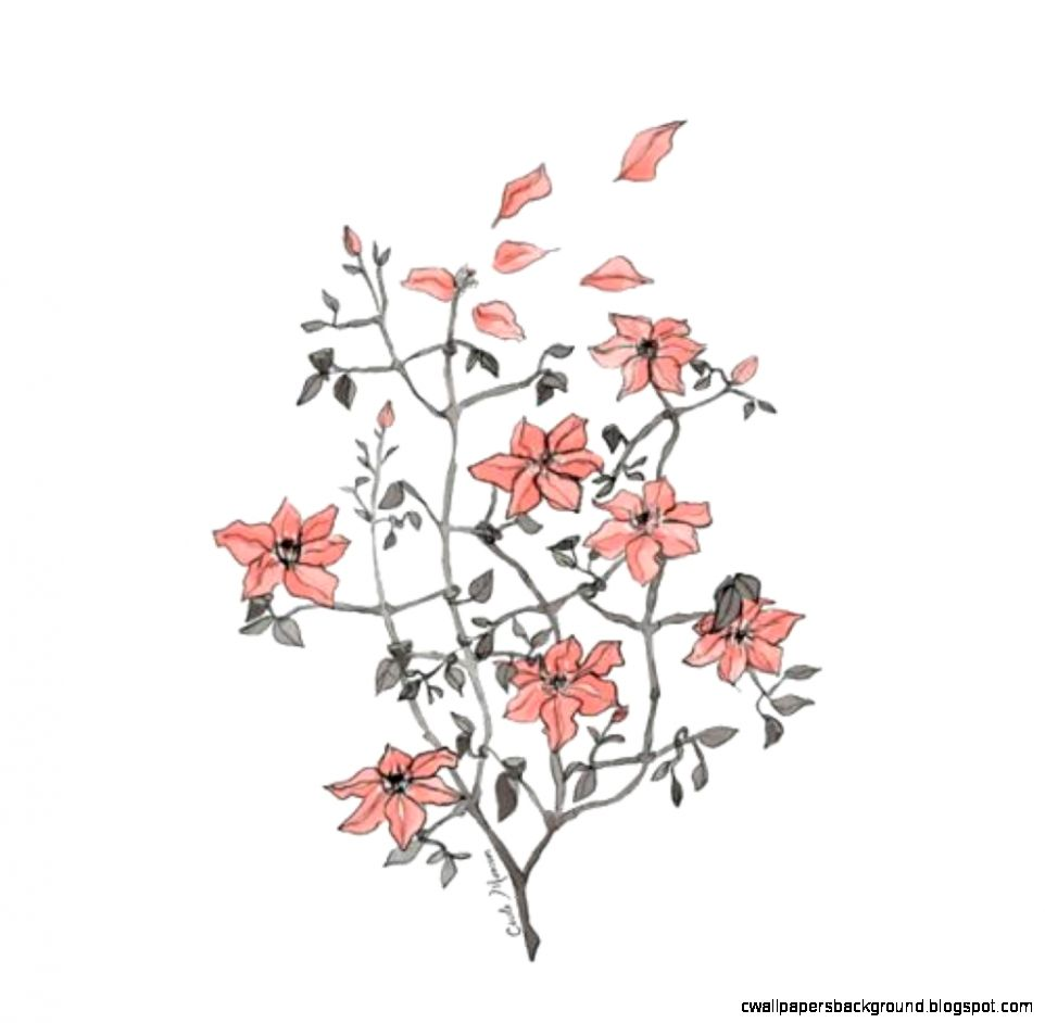 962x942 Flower Drawing Tumblr Transparent Wallpapers Background