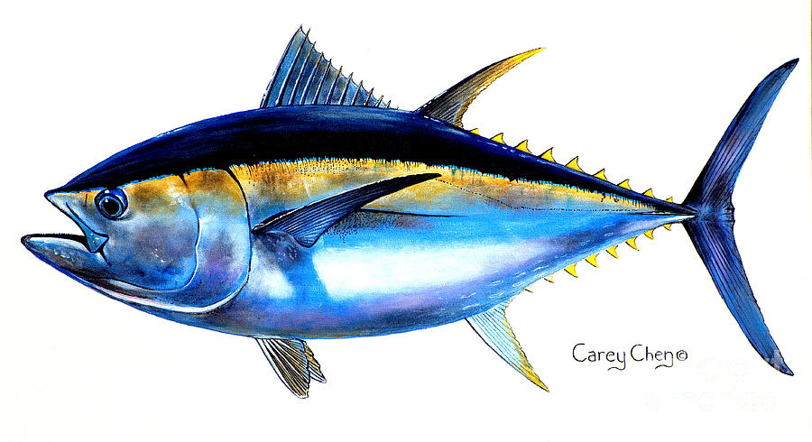 Tuna Drawing At Getdrawings Free For Personal Use Tuna Drawing