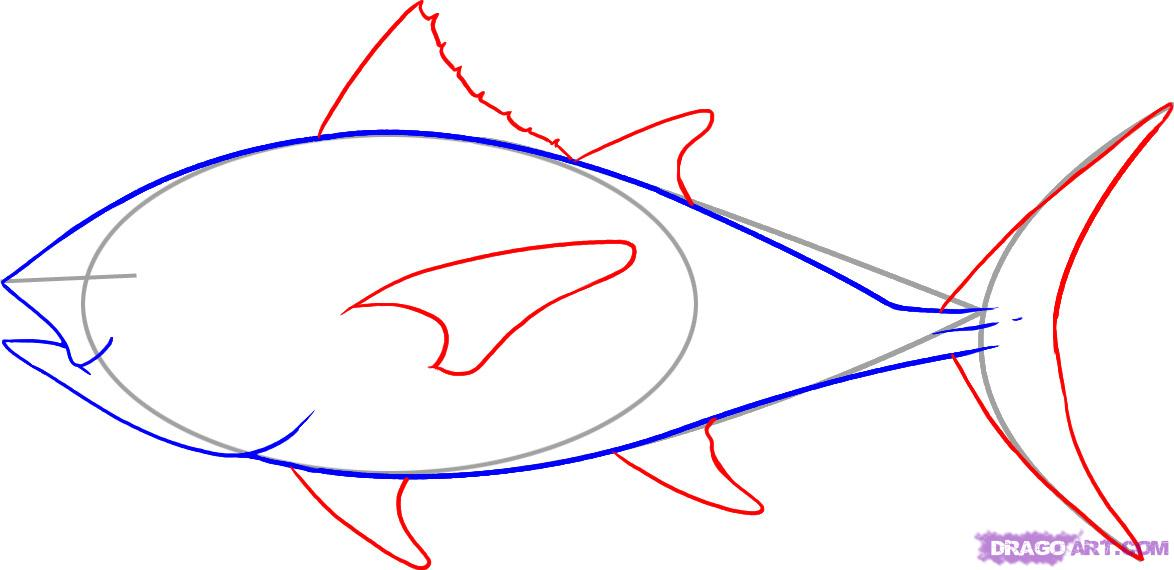 Tuna Drawing at GetDrawings.com | Free for personal use Tuna Drawing ...