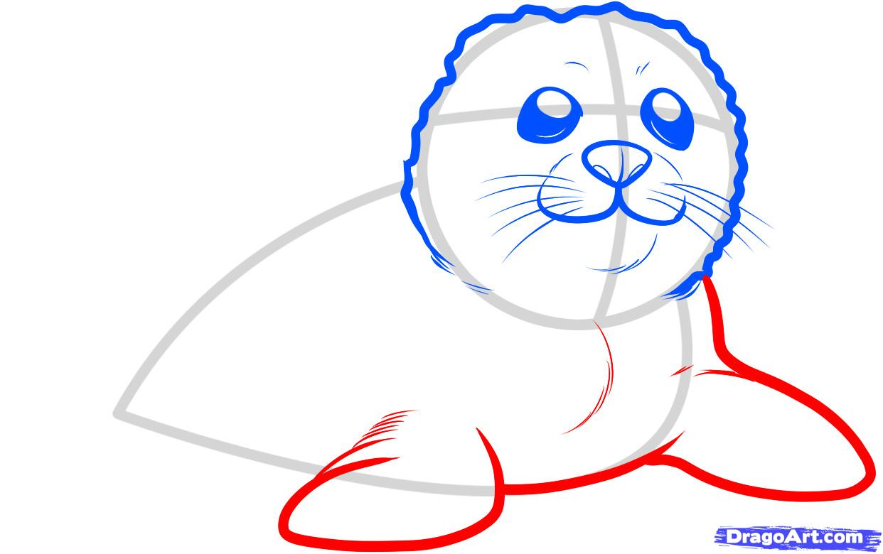 1242x780 How To Draw A Seal Pup, Seal Pup, Step By Step, Sea Animals