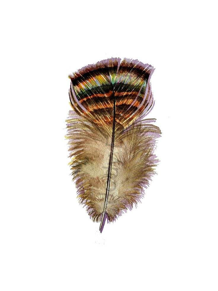 736x982 13 Best Turkey Feather Images On Feathers, Tattoo