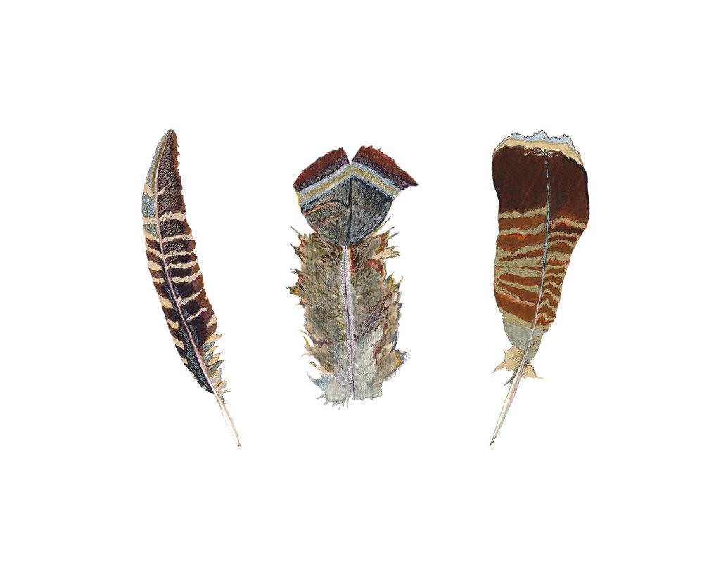 1035x800 Feather Art