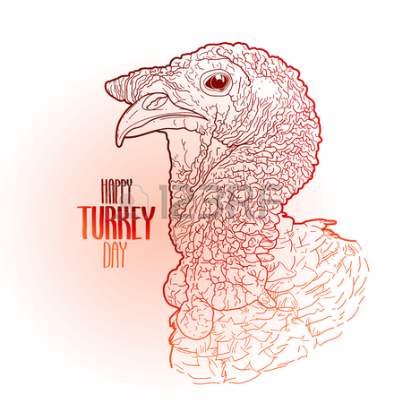 450x450 Vector Turkey Head Drawn In Line Art Style. Thanks Giving Day