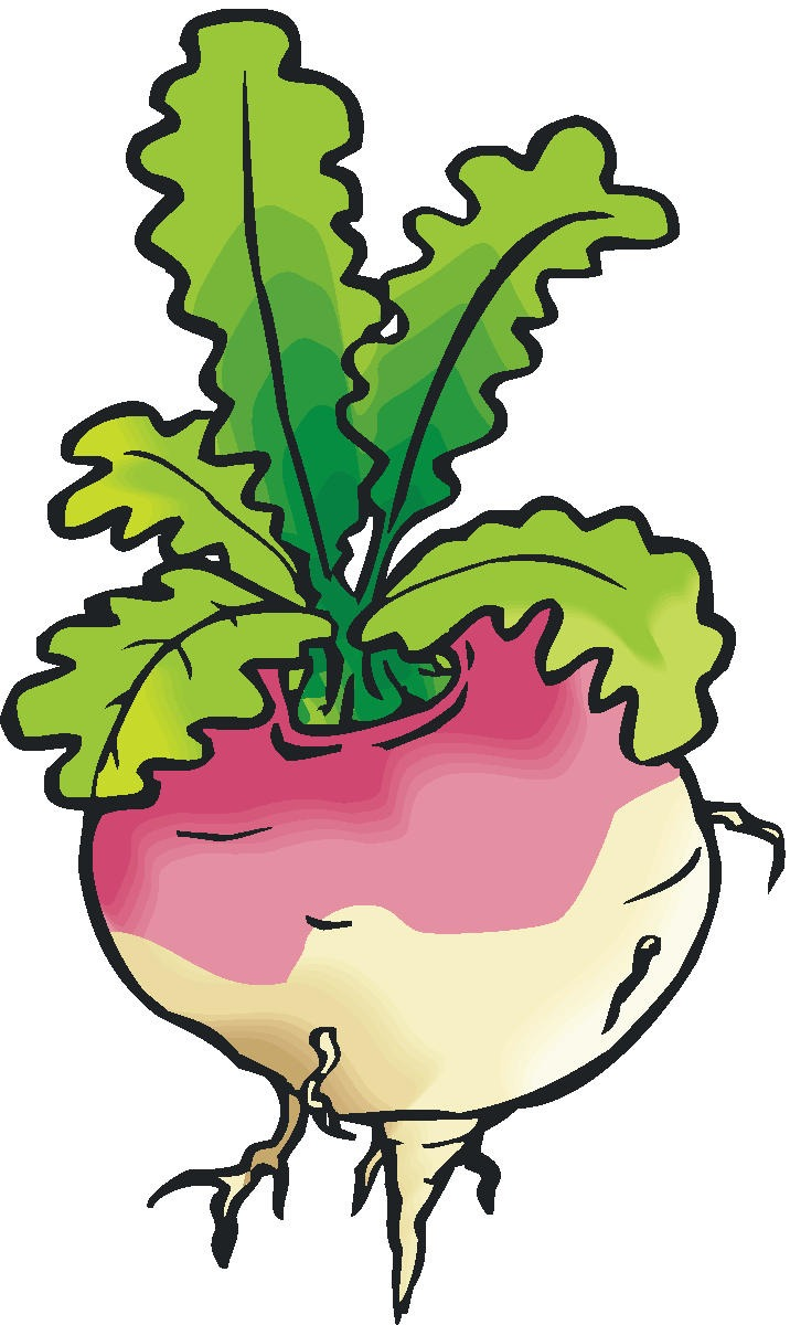 turnip drawing at getdrawings com free for personal use turnip rh getdrawings com turnip clipart turnip greens clipart