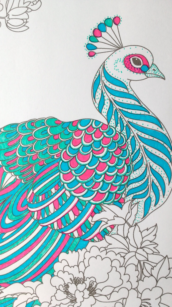 567x1008 Step By Step Coloring Peacock Feathers