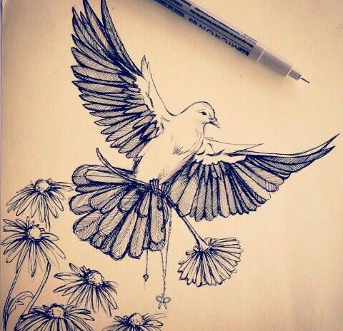 480x464 Dove Drawing The Art Of Tattoos Dove Drawing