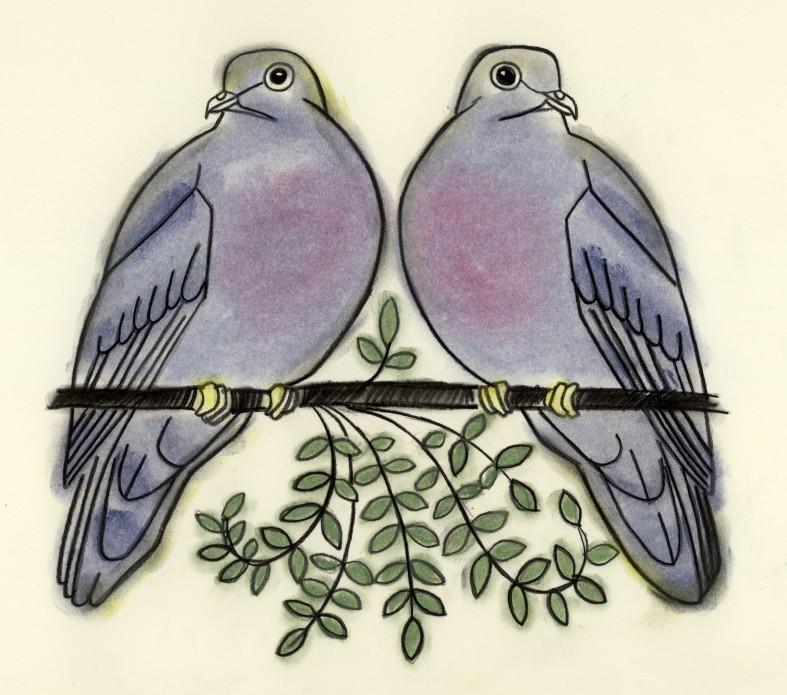 787x695 Two Turtle Doves Turtle Doves Turtle, Turtle Dove