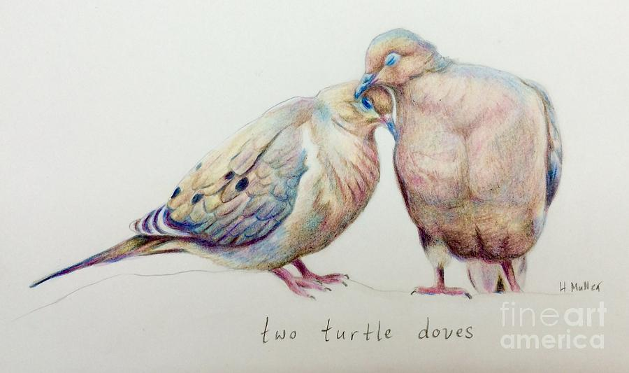900x533 Two Turtle Doves Drawing By Harriet Muller