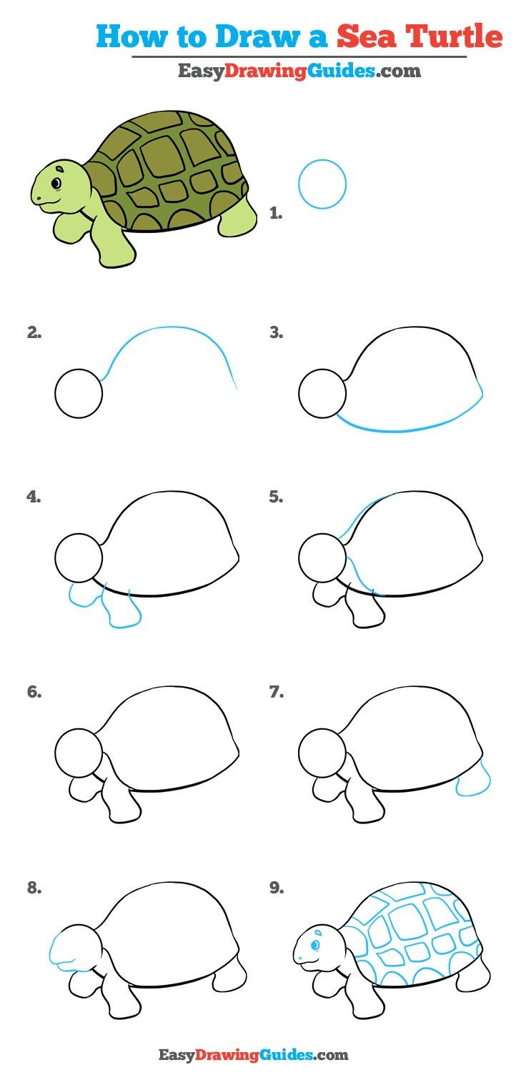 736x1518 How To Draw A Sea Turtle In A Few Easy Steps Easy Drawing