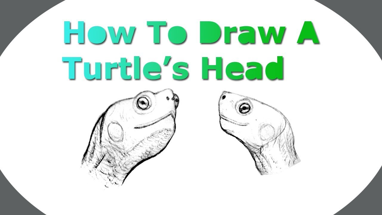 1280x720 How To Draw A Turtle's Head