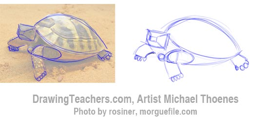 550x242 How To Draw A Turtle Walking