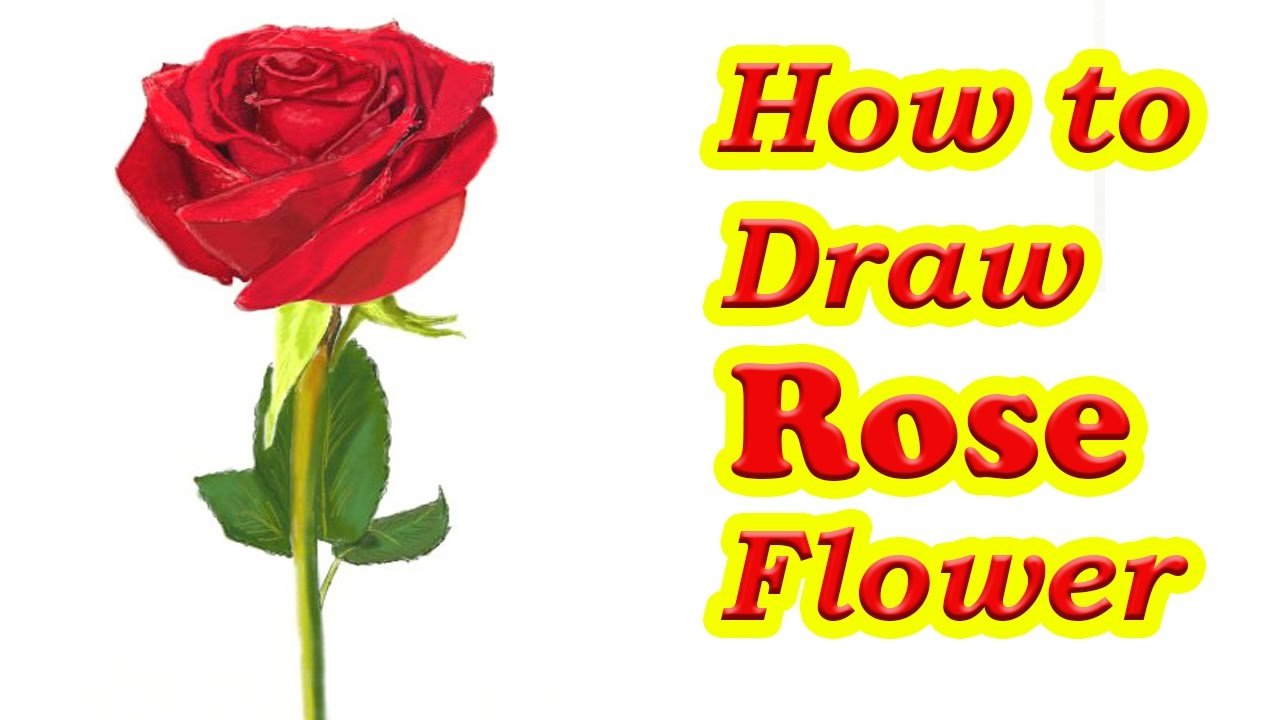 1280x720 Drawing Rose Flowers How To Draw A Rose Flower Stepstep Easy