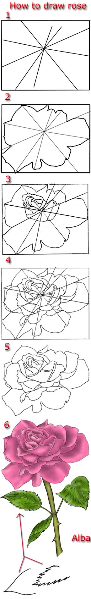 290x1905 Tutorial Draw Pink Rose Art Pink Roses, Tutorials