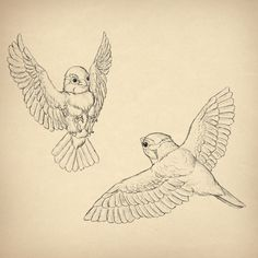 Two Birds Drawing at GetDrawings com   Free for personal use