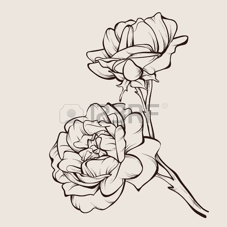 450x450 2,123 Two Roses Stock Vector Illustration And Royalty Free Two