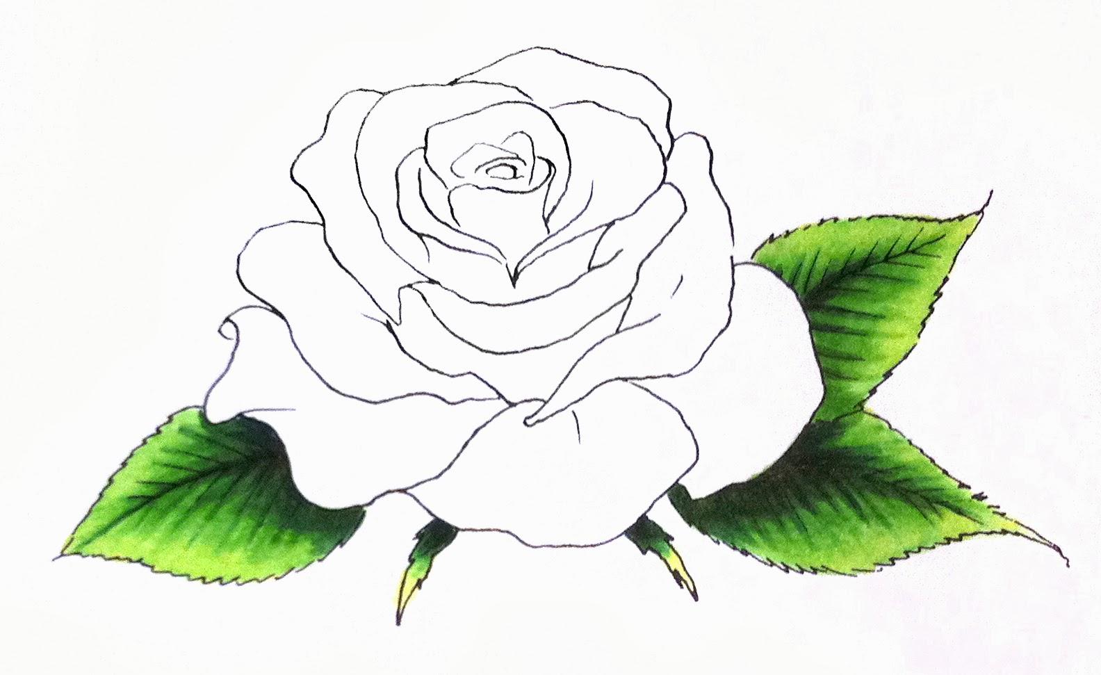 1584x971 I Like Markers Rose Petals