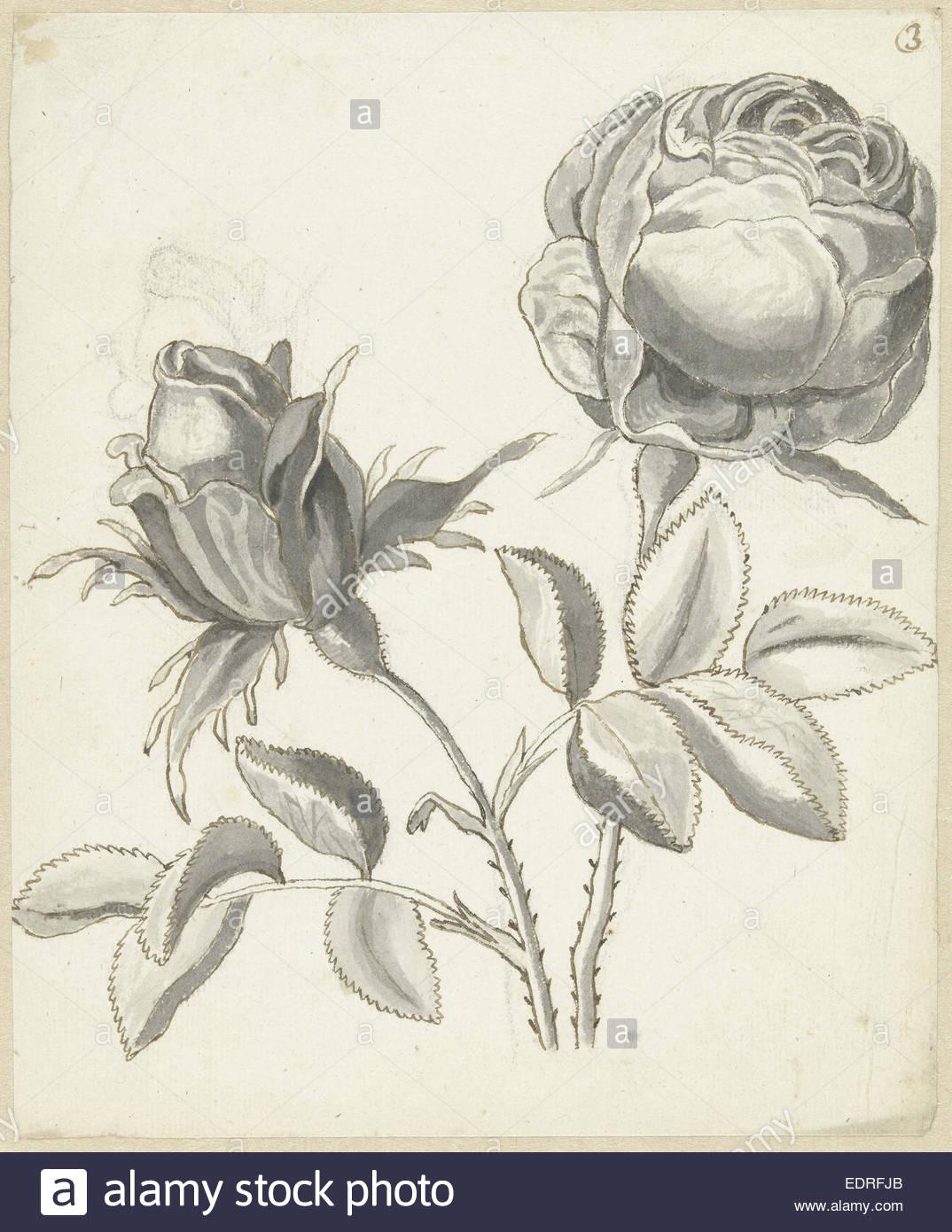 1074x1390 Two Roses, Bernard Picart, 1683