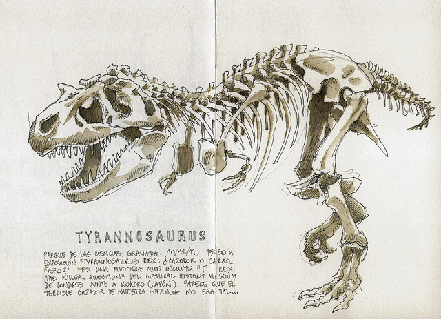 640x463 Tyrannosaurus Rex Tyrannosaurus, Sketches And Tattoo