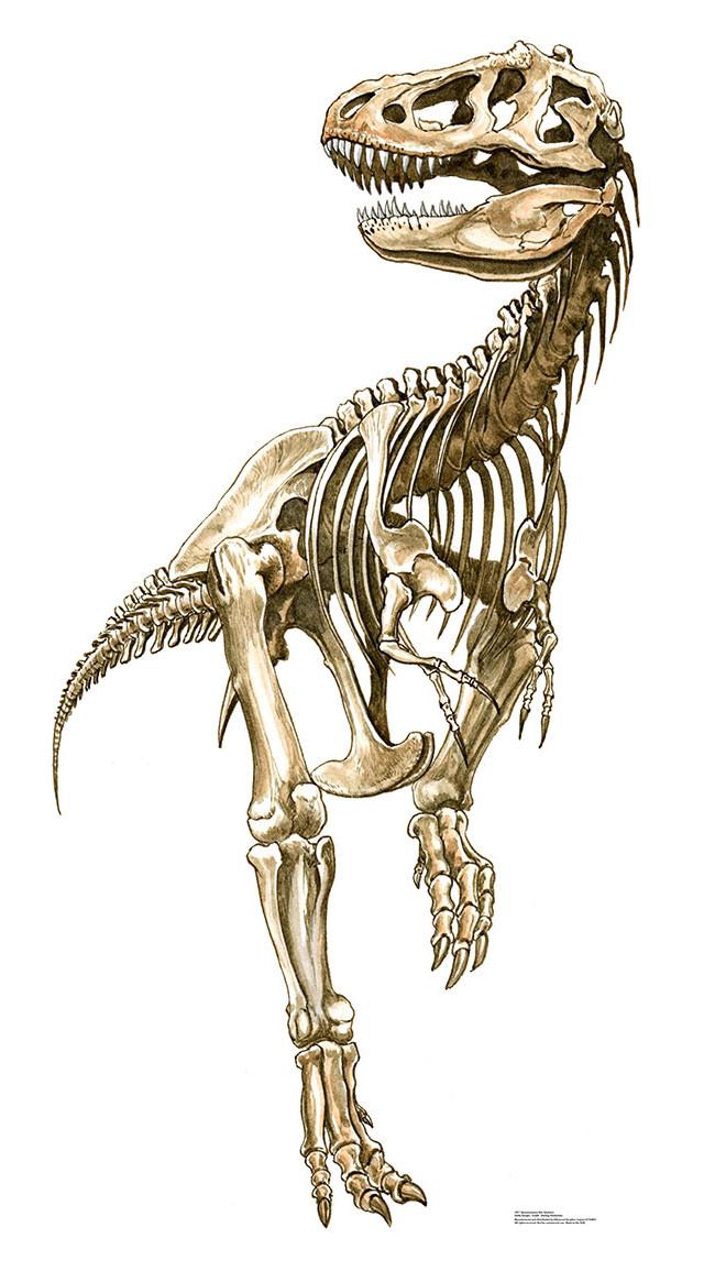 650x1155 Tyrannosaurus Rex Skeleton Cardboard Standup Tyrannosaurus