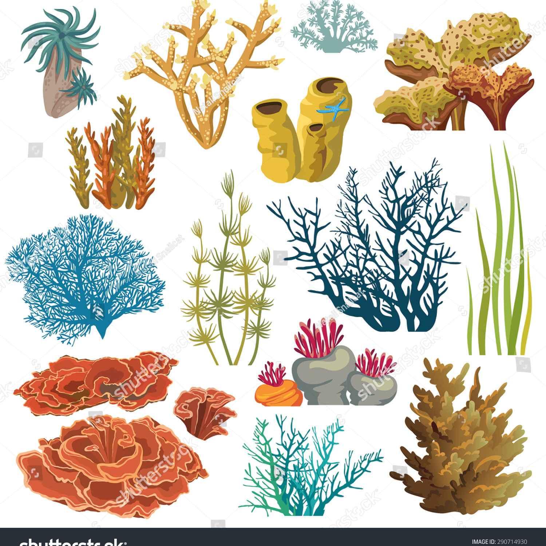 Underwater Plants Drawing At Getdrawings Free Download