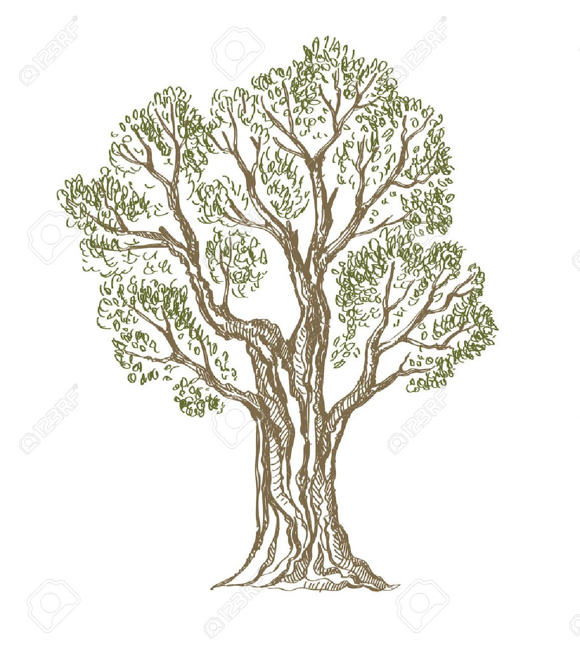 1156x1300 6,889 Oak Tree Drawing Cliparts, Stock Vector And Royalty Free Oak