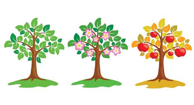 645x350 Vector Apple Tree, Vector